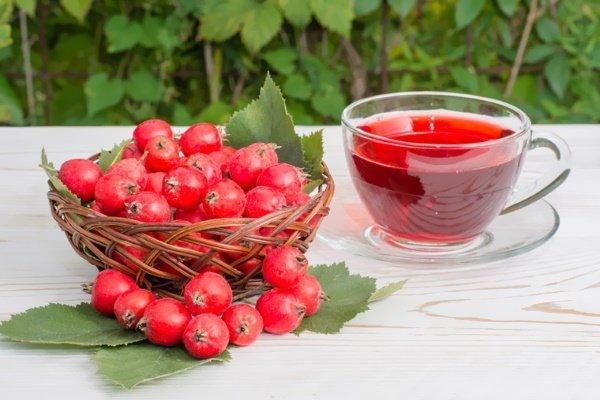 Чай из боярышника