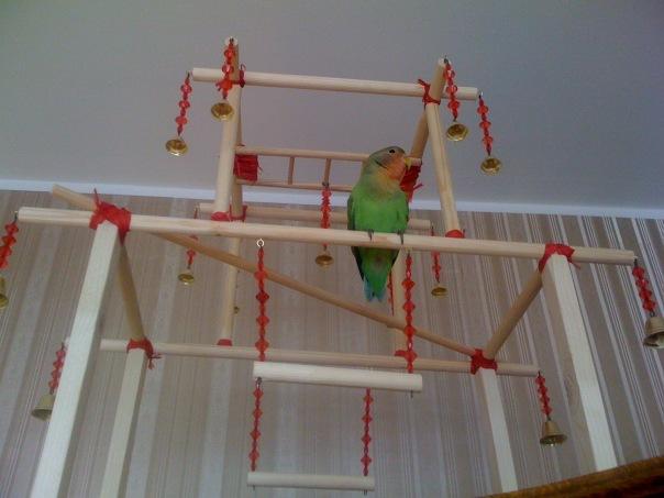 Что такое настенные стенды для попугаев